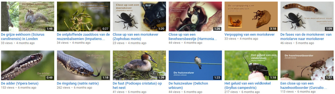 Youtube meneerspoor